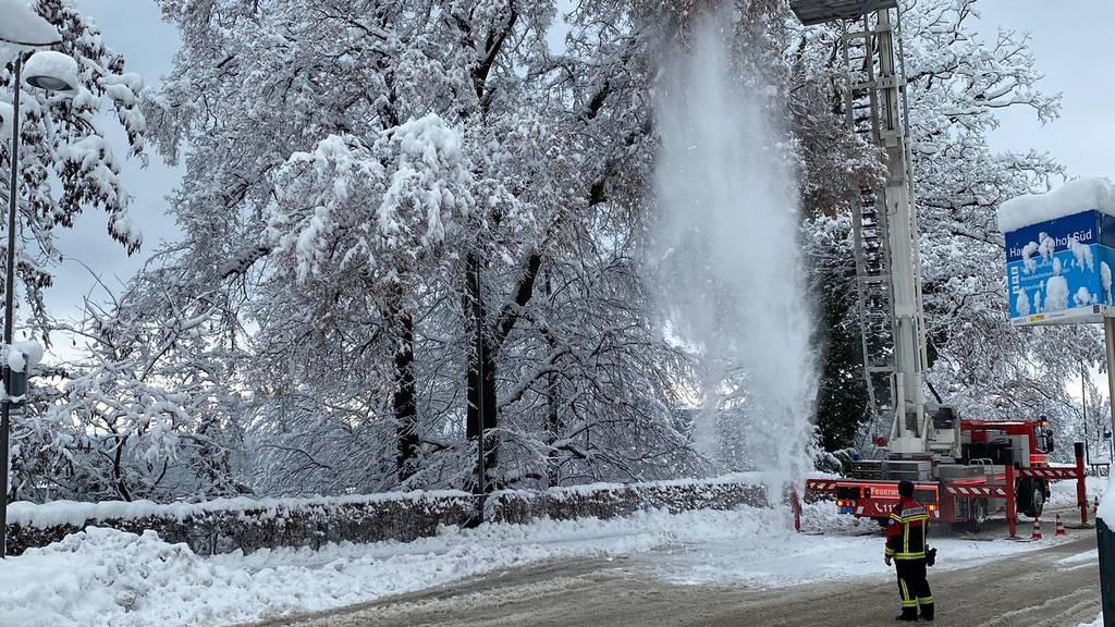 Rekordschnee im FM1-Land – Lebensgefahr durch schneebeladene Bäume