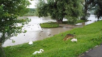 Die Limmat führt viel Wasser, ein Hochwasser droht aber nicht
