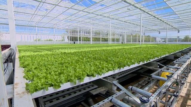 Erster Hydro-Salat