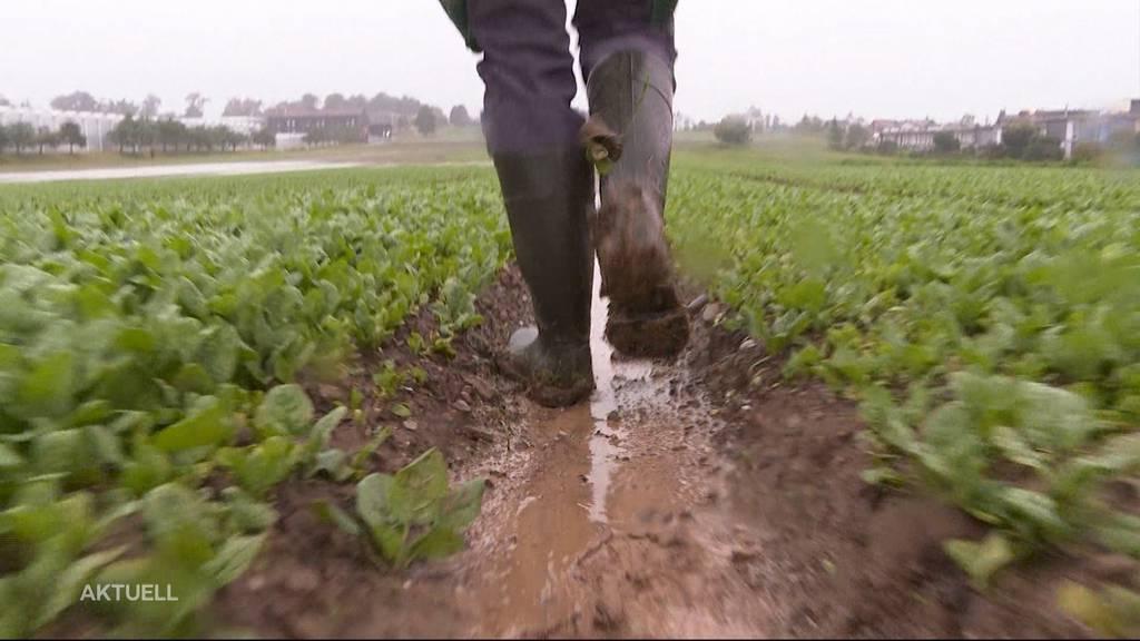 Grosser Ausfall: Den Landwirten verfault wegen des Hochwassers das Gemüse