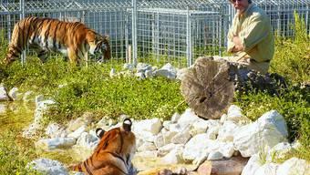 Neues Aushängeschild: Werden René Stricklers Tiger bald die grosse Attraktion in Langenthal? (Bild: Hanspeter Bärtschi)