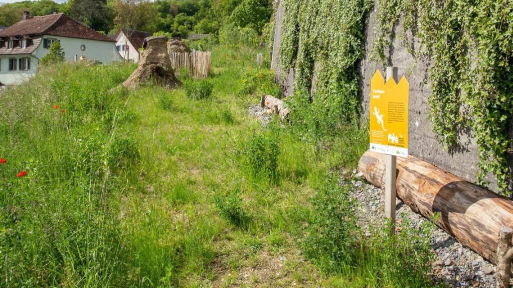 Ein Beispiel für «Vielfalt statt Langeweile»: Diese Fläche in Biberstein bei Aarau wurde zu einem Lebensraum für Pflanzen und Tiere umgestaltet.