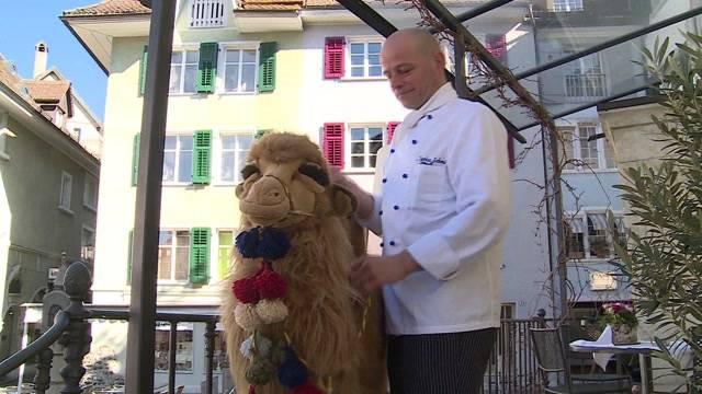 Plüsch-Kamel Klaus ist zurück!