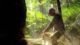 In Brasilien wird verstärkt Amazonas-Regenwald zerstört zugunsten der Agrarindustrie, die neue Flächen für den Anbau von Soja und die Rinderzucht benötigt. (Archivbild)