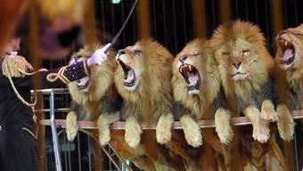 «Zirkus ja, aber ohne Tiere», lautet das offizielle Motto der Tierschützer.