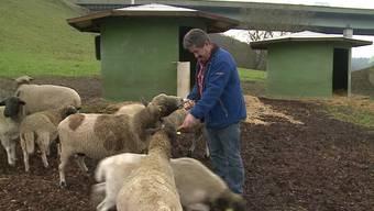 Schafe geklaut in Birmenstorf