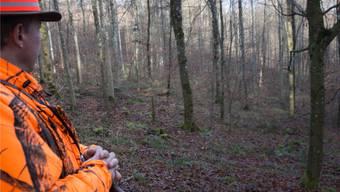 Daniel Wehrli beobachtet den Wald und hofft, dass ein Reh bei ihm vorbeiläuft.kob