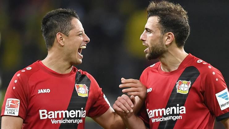 Die Leverkusen-Spieler Javier Hernandez (l.) und Nati-Spieler Admir Mehmedi (r.) verstehen sich super.
