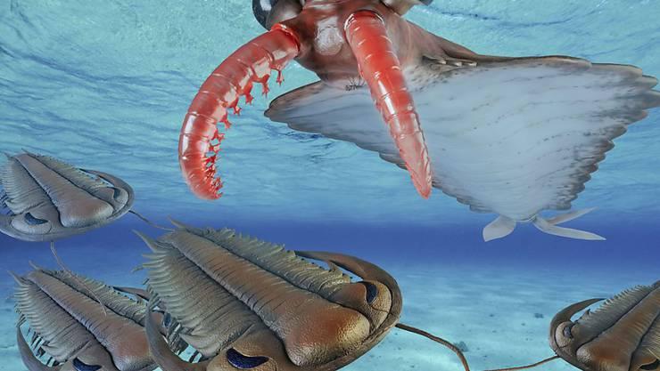 So sah es vermutlich vor einer halben Milliarde Jahre aus, wenn die Urzeit-Garnele Anomalocaris Paradoxides-Trilobiten jagte. Das Sauriermuseum Aathal widmet den ausgestorbenen Gliederfüssern seine neue Sonderausstellung.