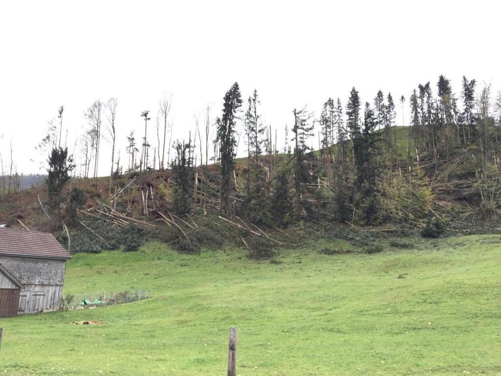 Ein zerstörter Wald in der Nähe von Hundwil