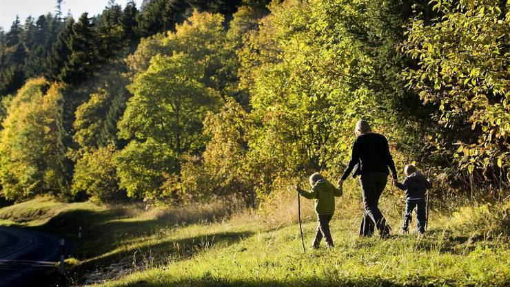 Dem Forstbetrieb bleibt immer weniger Geld übrig, um den Jungwald zu pflegen oder die Waldwege zu unterhalten. (Archiv)