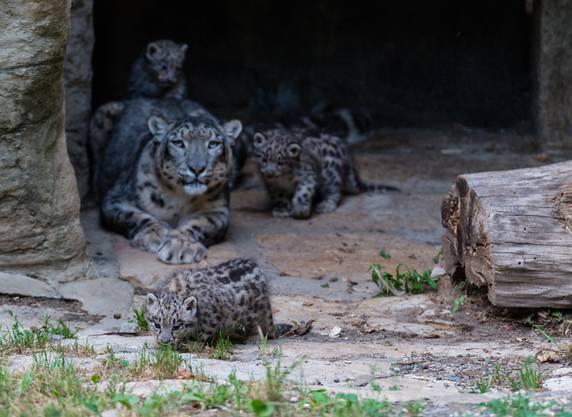 Die Eltern der beiden Männchen und des Weibchens sind Mayhan (9) und Pator (8).