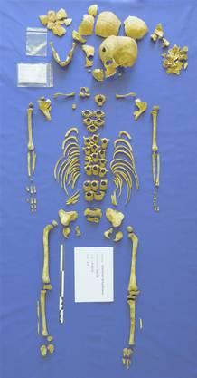 Eines der untersuchten Skelette.
