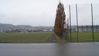Links der bestehenden Sportanlage Niedermatten wurde Land für neue Trainingsplätze eingezont.
