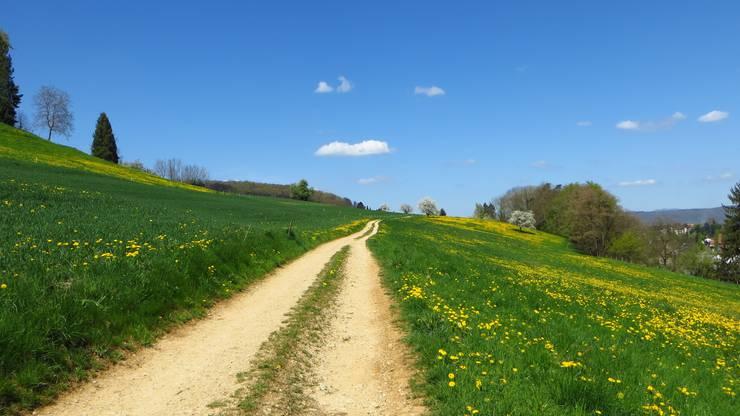 Auf so einem Feldweg startet der Rundgang von Frenkendorf aus in Richtung Schillingsrain. Blick zurück Richtung Frenkendorf.