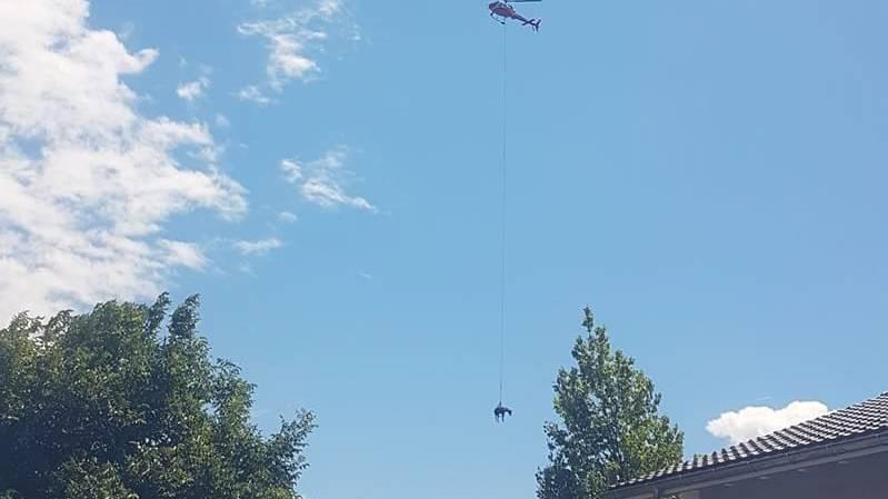 Mit einem Helikopter wird Stute Anteia geborgen.