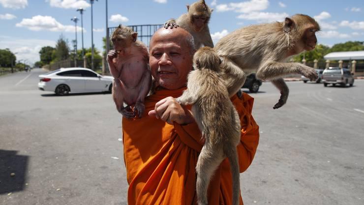 Ein buddhistischer Mönch wird in Lopburi von Affen belagert.