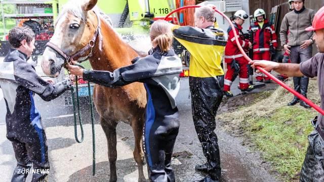Pferd in Gülleloch gefallen