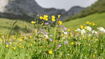 Landschaften mit hoher Artenvielfalt produzieren mehr Biomasse als eintönige Flächen und können sich besser anpassen.