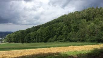 In diesem Waldstück am Rand des Naturschutzgebietes «Chirchhölzli» bei Uhwiesen lebte Franz Wrousis vor seiner Bluttat. Am Dienstagabend wurde er bei Thalwil ZH gefasst.