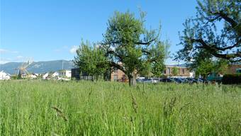 Das Kontiki in Subingen möchte ausbauen. Letzte Woche konnte der Stiftungsrat das Land südlich des heutigen Heims erwerben und plant nun einen Neubau.