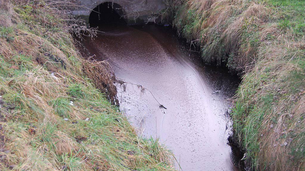 Verschmutzter Moosgraben in Malters: Fettgemisch aus einer Kompostieranlage ausgelaufen.