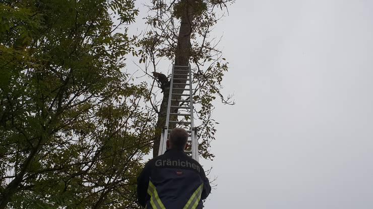 Ein Passant entdeckte das Tier auf einem Baum an der Wyna und rief die Feuerwehr