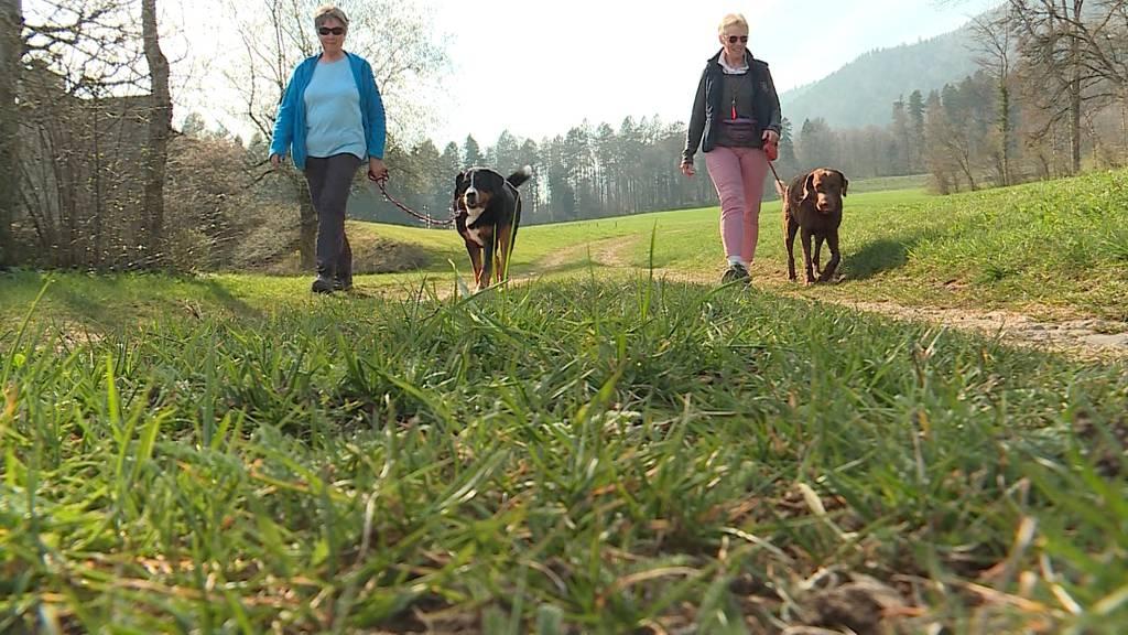Halten sich die Hundebesitzer an das neue Gesetz?