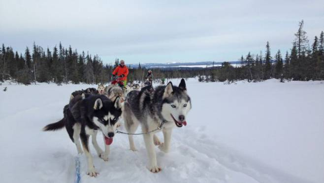Das Paar darf zwar acht Hunde behalten und seinem Hobby somit weiter nachgehen. (Archivbild)