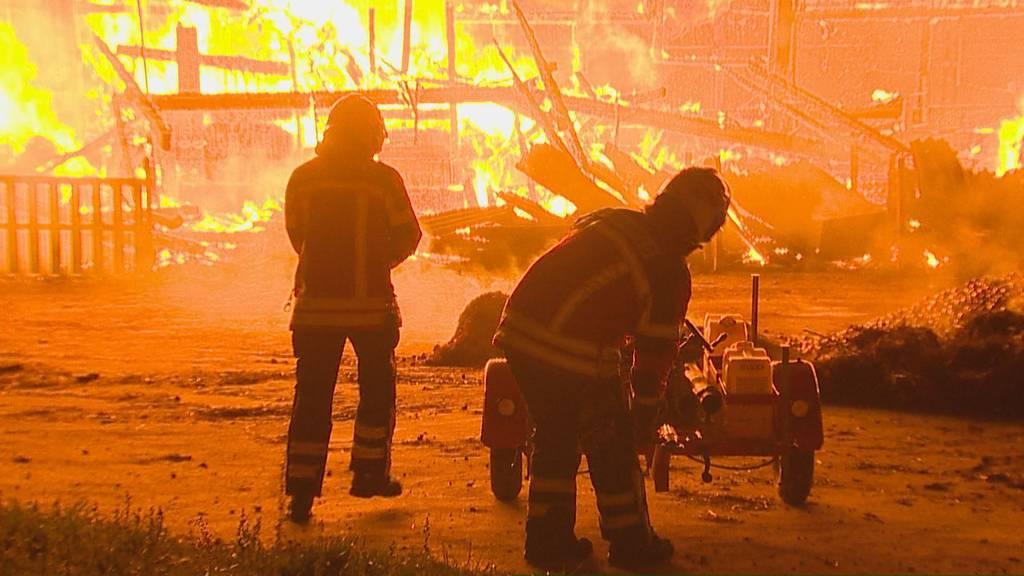 Meterhohe Flammen zerstören Stall in Frauenfeld