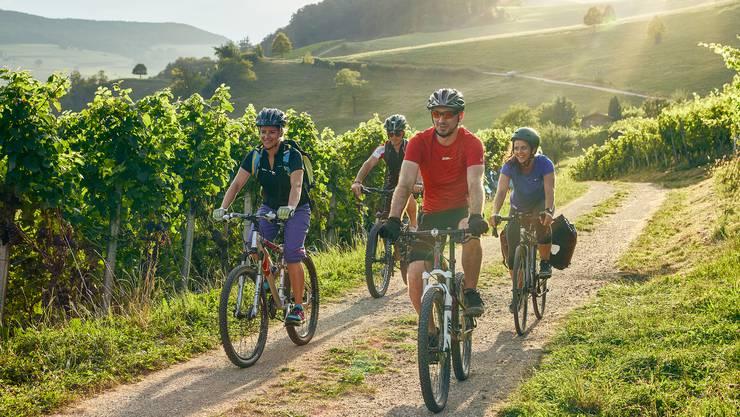 Biken in den Rebbergen von Oberflachs ist nur eines von vielen Freizeitangeboten.