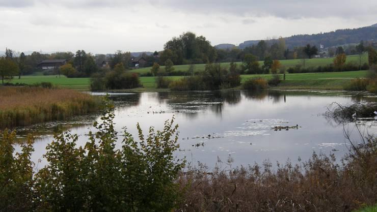 Ziel sind weitere Stillgewässer (im Bild die Stille Reuss bei Rottenschwil) zur Vernetzung von Amphibien-Laichgebieten.