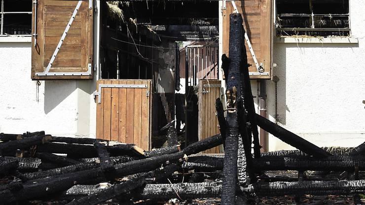 Rund 20 Pferde und Ponys sind bei einem Feuer in Gebäuden des Institut Equestre National d'Avenches (IENA) in Avenches VD umgekommen.