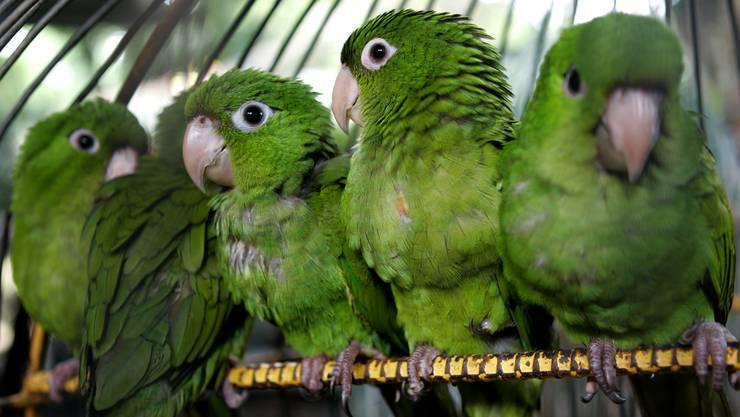 Der Bundesrat will illegalen Tier- und Pflanzenhandel schärfer sanktionieren. Erst recht, wenn geschützte Arten betroffen sind. (Symbolbild)