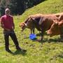 Thumb for 'Nach erneutem Kuh-Angriff: Bauer gibt Tipps für Wanderer'