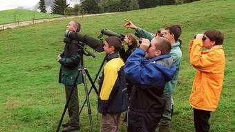 Beobachten von Vögeln: die Vogelwarte Sempach lässt die Brutvögel zählen (Archiv)