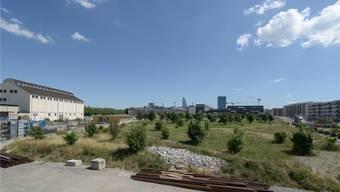Seit 2007 entsteht auf dem Erlenmatt ein neues Stadtquartier. Nun haben Archäologen eine Siedlung aus der Mittelbronzezeit an dieser Stelle zutage gefördert.