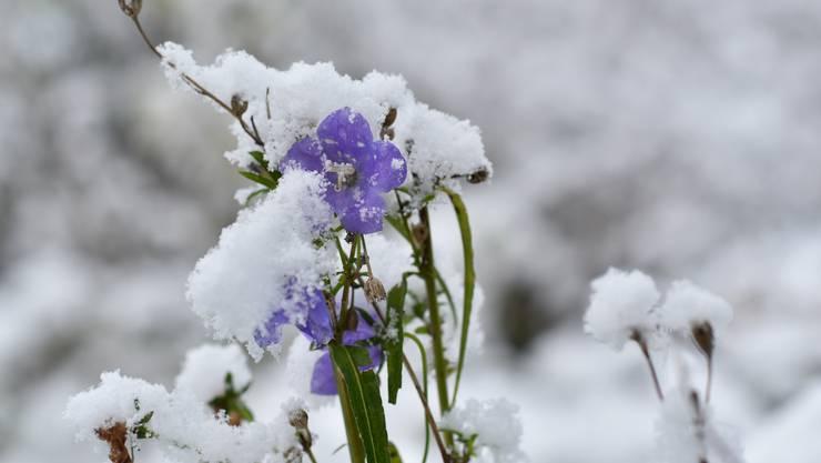 Der Winter geht in die Verlängerung: Dieses Jahr löst das Wetter nicht wirklich Frühlingsgefühle aus.