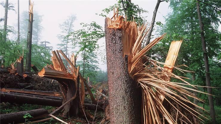 So schlimme Schäden, wie Lothar verursacht hatte, gibt es aber nicht. (Archivbild)