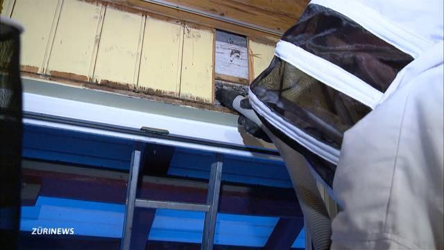 Feuerwehr im Kampf gegen Wespenplage