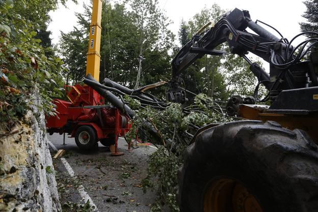 Die gefällten Bäume werden mit schwerem Gerät zum Lastwagen transportiert