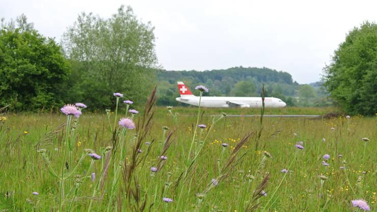 Das Naturschutzgebiet in Kloten ZH verhindert den Bau zusätzlicher Abrollwege.