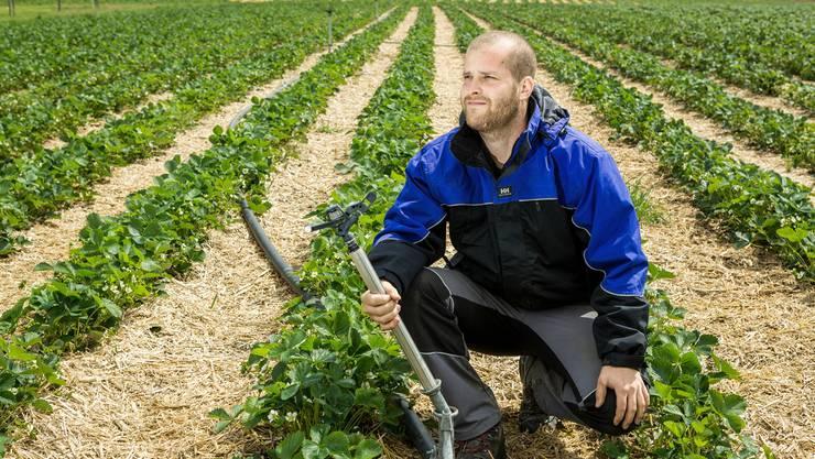 Der Wettinger Tobias Lüscher versucht, seine Erdbeeren mit Wasser vor dem Frost zu schützen.
