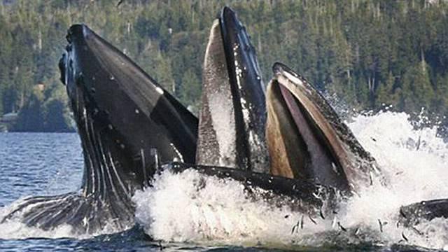 Gefährliche Zone für Wale rund um Madagaskar (Symbolbild)