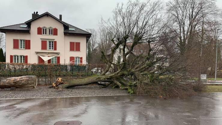 Ein umgestürzter Baum vor der Schule in Fahrwangen.