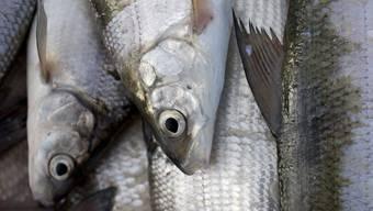 Nicht alle, aber viele Fische kann man essen. (Symbolbild)