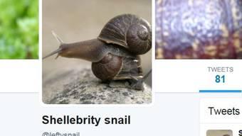 Linksgedrehte Schnecken sind sehr selten und können sich nicht mit rechtsgedrehten Artgenossen fortpflanzen. Forscher suchen per Kontaktanzeige eine besser Hälfte für die linke Schnecke Jeremy (auf Twitter @leftysnail).