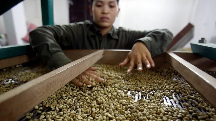 Vietnam steht in punkto Kaffeeanbau für schlechte Qualität.