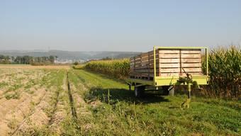 Im Hard und im Härdli (hinten) will das Döttinger Bauunternehmen Birchmeier Kies abbauen – heute wird hier Landwirtschaft betrieben.