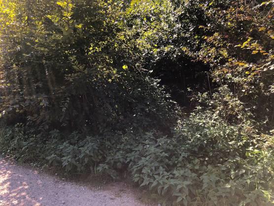 Weiter weg von der Hauptstrasse, wird der Wald dichter.